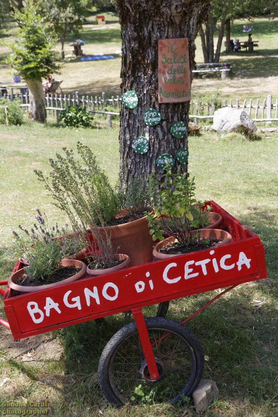 Bagno di Cetica il salice delle erbe aromatizzate