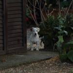 Agriturismo il Vermigliaio Alberese cucciolo