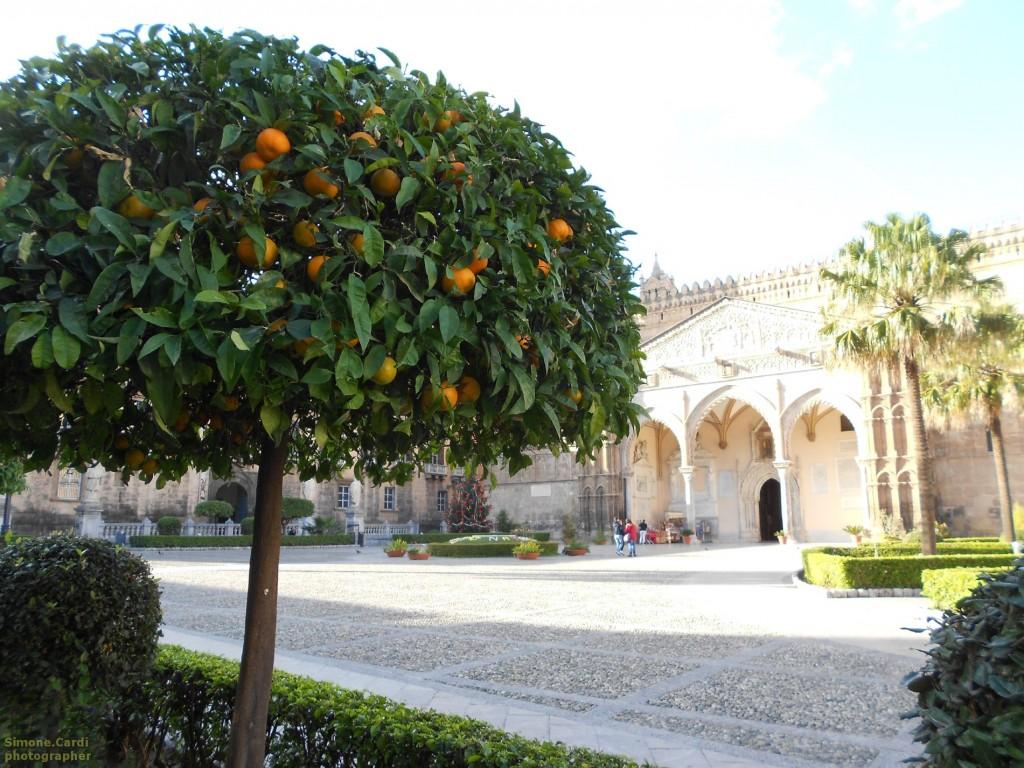 Cattedrale di Palermo aranci