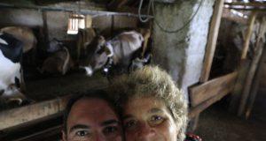 Beeontour adotta una mucca in Valsugana