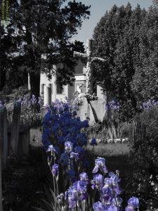 cimitero degli inglesi interni, Firenze