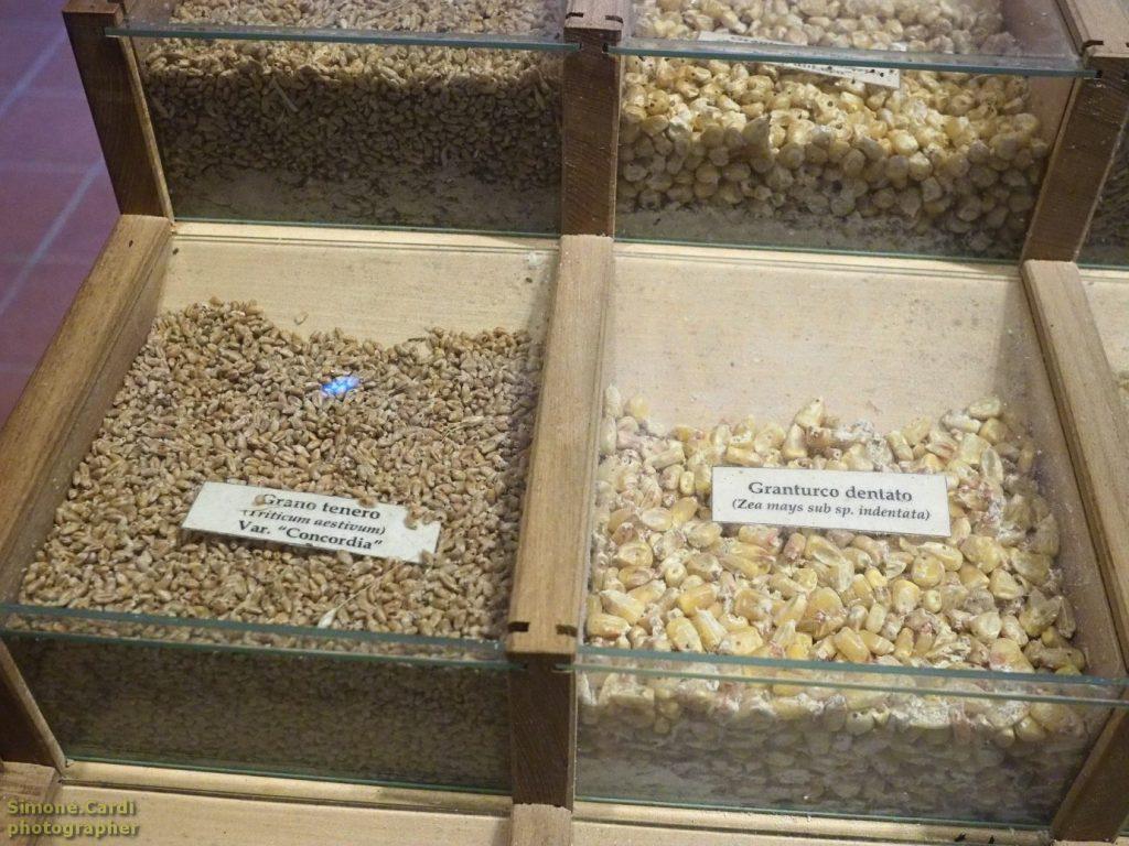 casa d'erci museo le teche con i semi