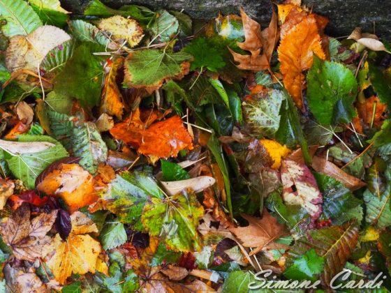 colori autunno Toscana